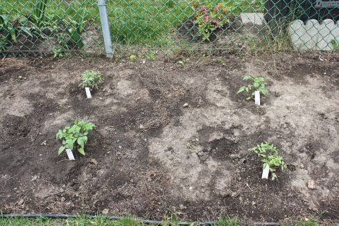 Garden In Disrepair? Use These Helpful Tips To Get It Into Shape!